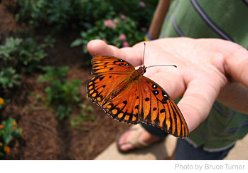 How To Attract Butterflies To The Garden?